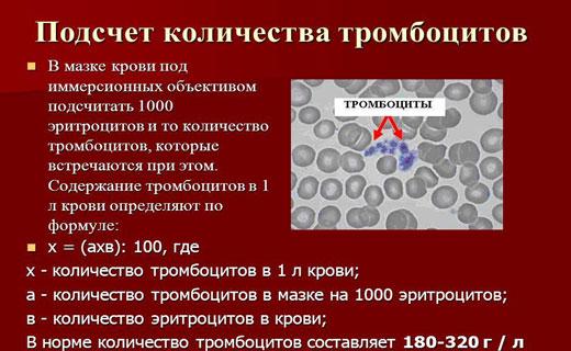 большое количество тромбоцитов
